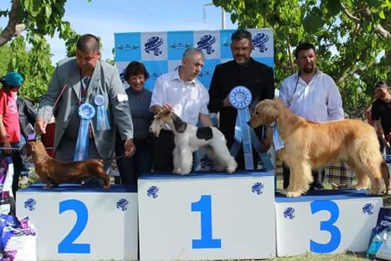 Éxito en la Exposición Internacional de San Juan
