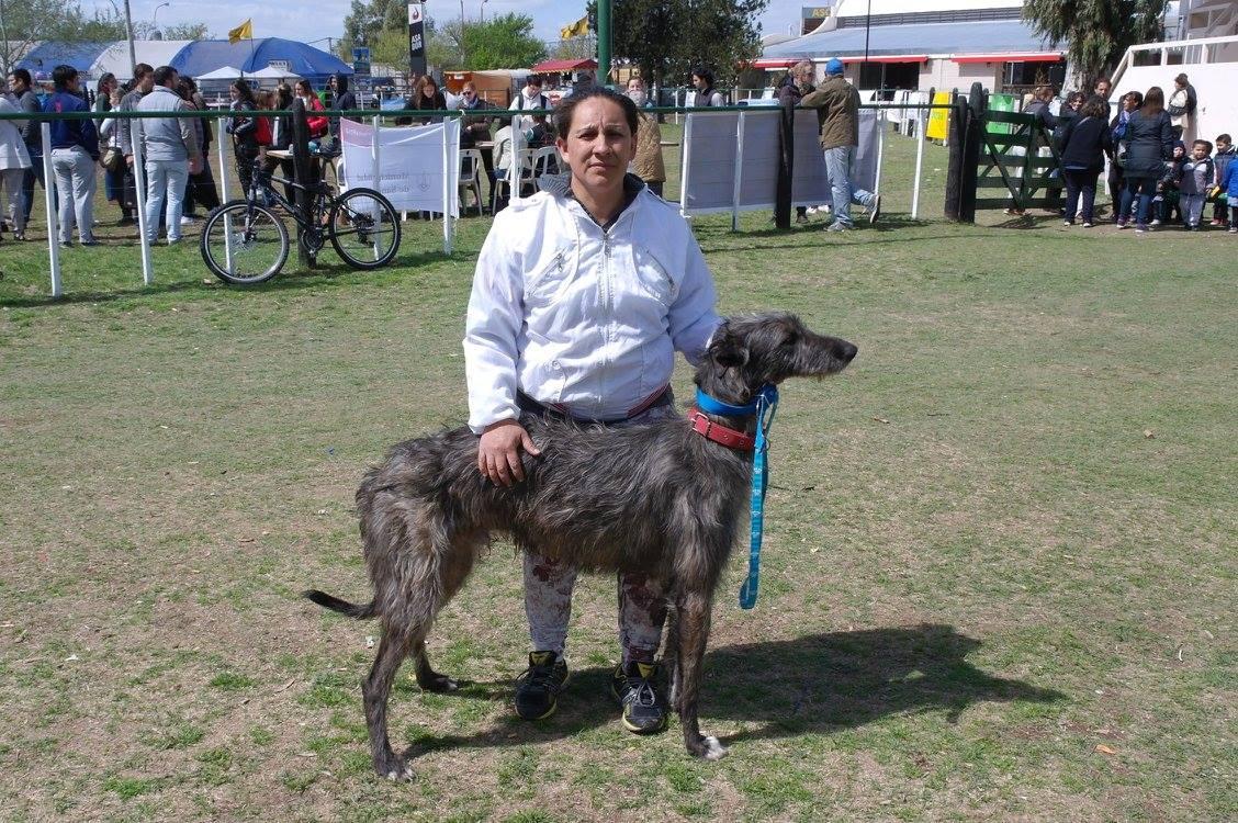 El Kennel Club en Santa Rosa, ri galgo barbucho