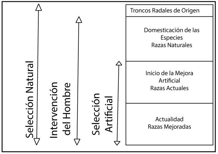 El Concepto de Raza - Proceso-histórico-de-formación-de-las-razas-domésticas