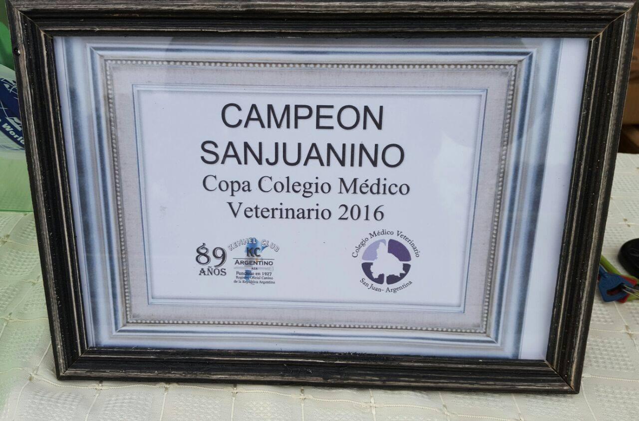 diploma Campeon San Juan Colegio de Veterinario