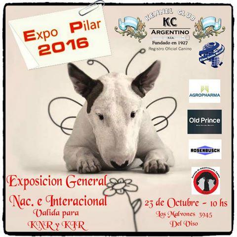Exposición Pilar 2016