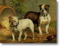 antiguo-bulldog-ingles-cuadro