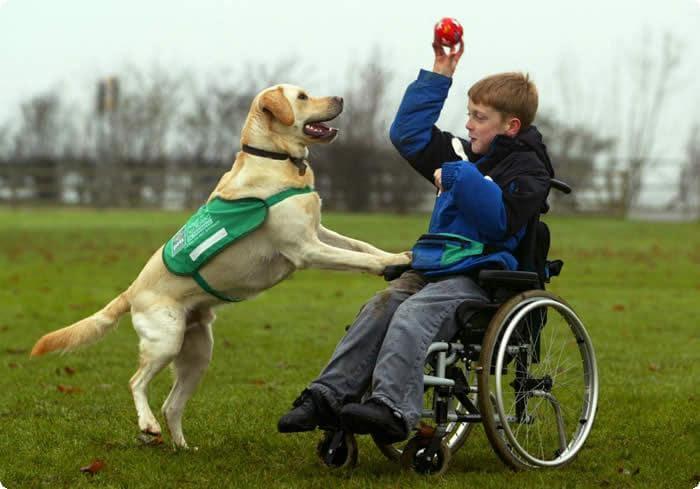 perros de asistencia - Kennel Club Argentino