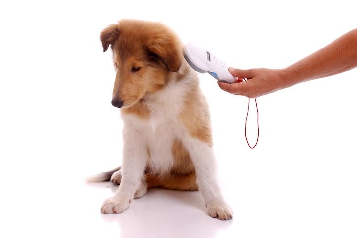 lectura de microchip - como hacer los papeles de tu perro