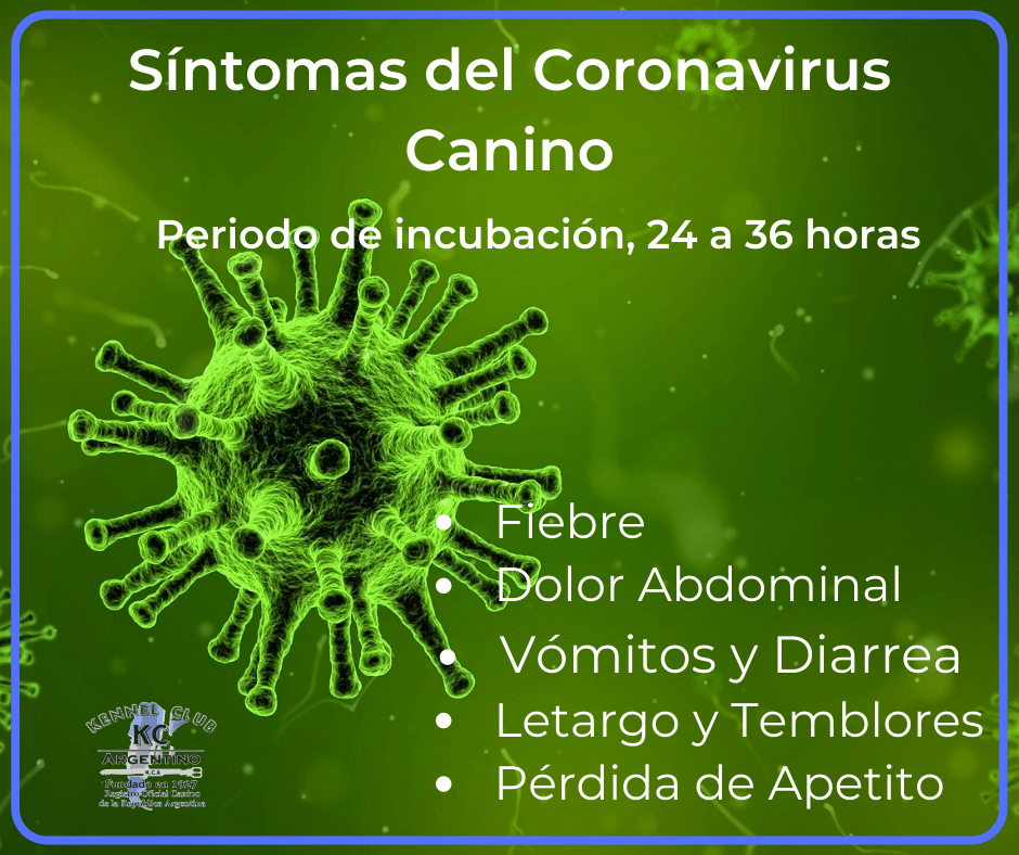 Síntomas del Coronavirosis Canino