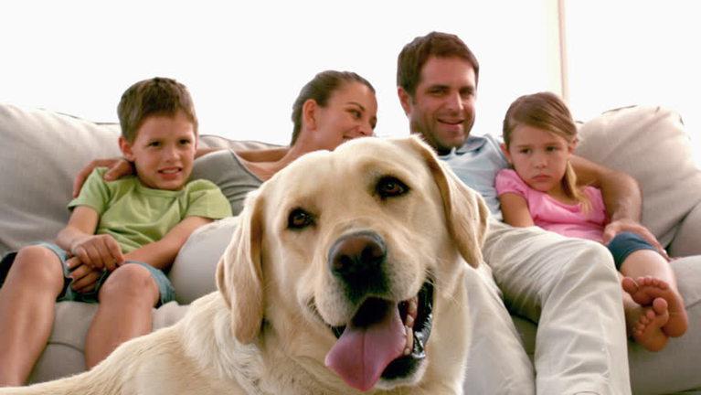 Familia con perro labraddor - Nesting con nuestros perros