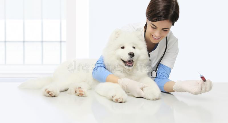 antivacunas en perros