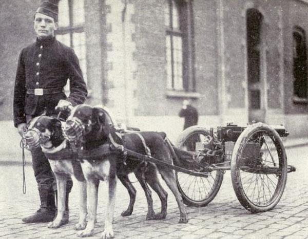 Rottweiler antiguo con soldado