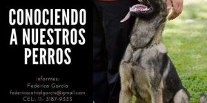 """Curso """"Conociendo a nuestros perros"""""""