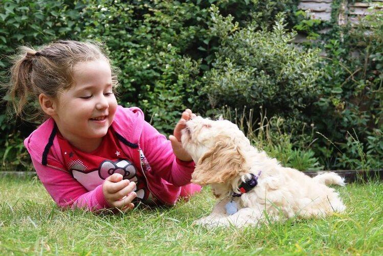 Niña acostada en el piso con cachorro / Socialización de cachorros
